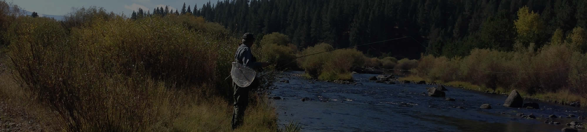 A Fly Fisherman on the river